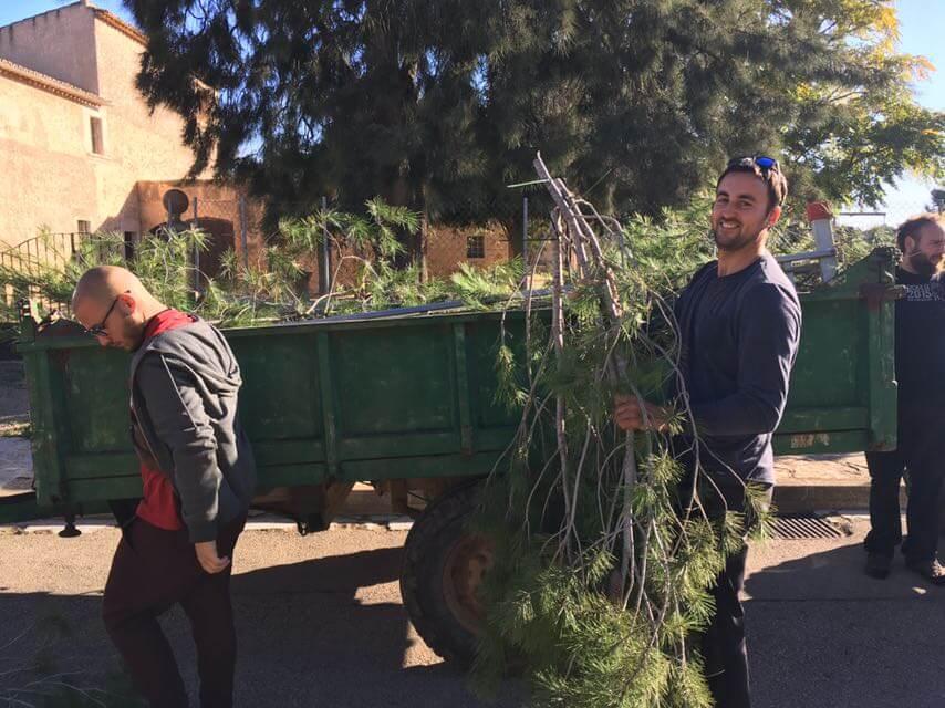 El pino y el vino en Mallorca